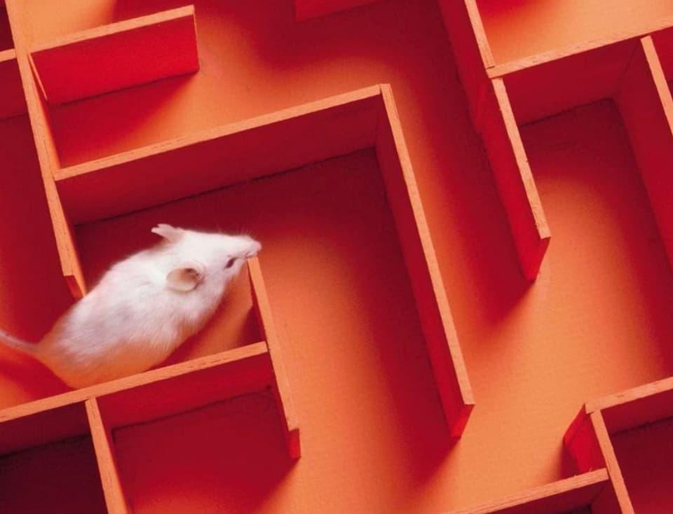 Mes followers sur Twitter sont des petites souris de laboratoire !